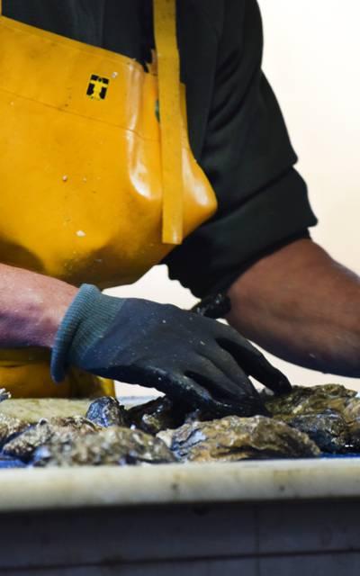 Production d'huîtres en Baie de Paimpol par la ferme ARIN ©S. Arin