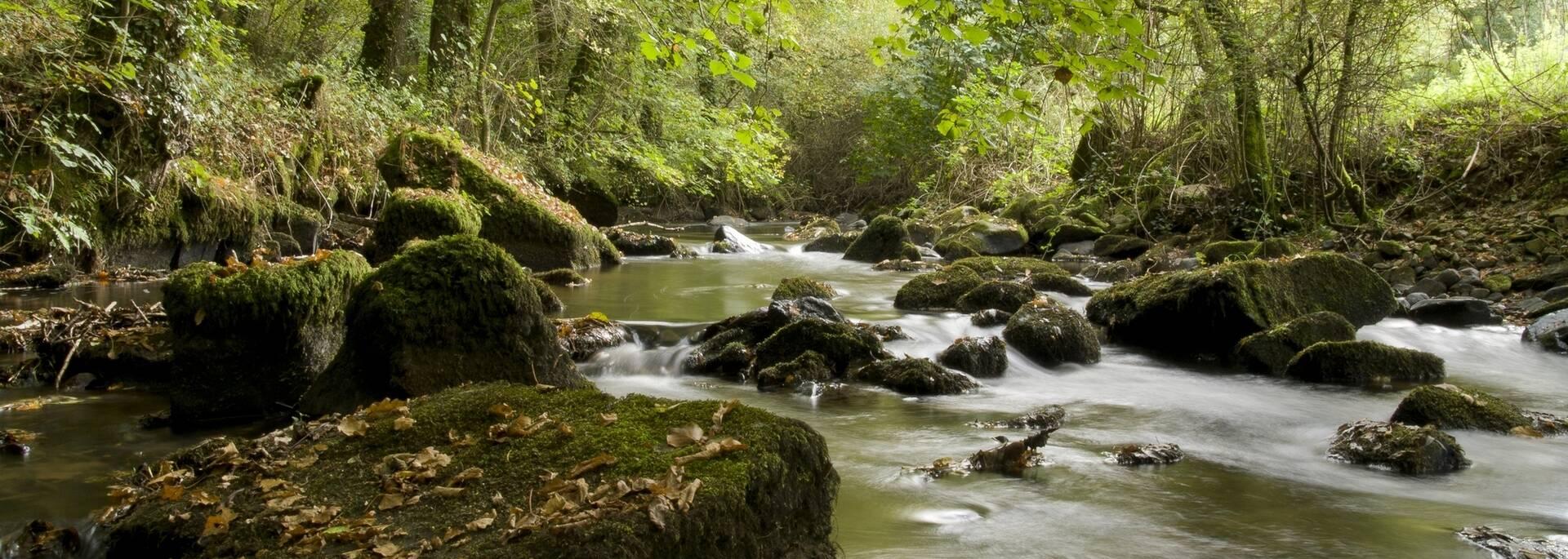 Rivière du Léguer ©S. Jouon