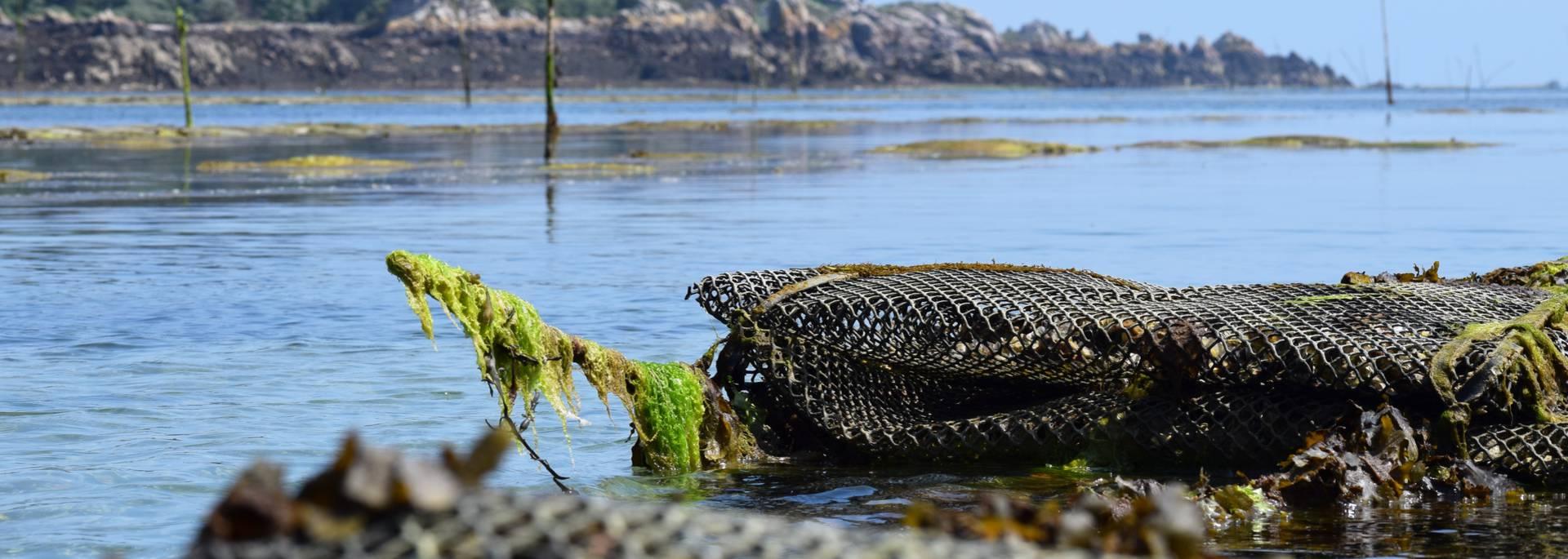 Production ostréicole en Baie de Paimpol ©S. Arin