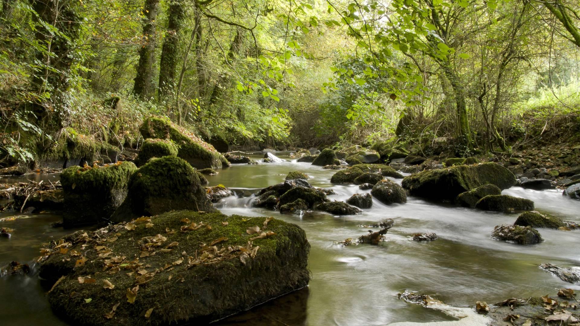 Vallée du Léguer ©S. Jouon